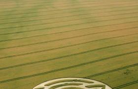 2012年6月25日经典麦田怪圈报告在威尔特郡