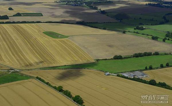 2014年8月6日英国威尔特郡麦田圈