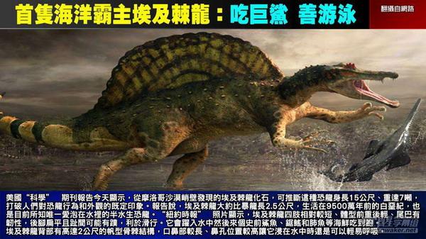 关键时刻20140915水陆两栖埃及恐龙 比霸王龙更凶猛